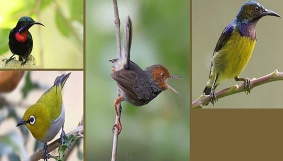 Nama nama burung kecil dan gambarnya