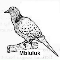 Mbluluk