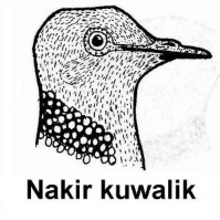 Nakir kuwalik